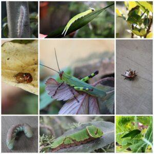Nossa Horta no Verão II: animais benéficos