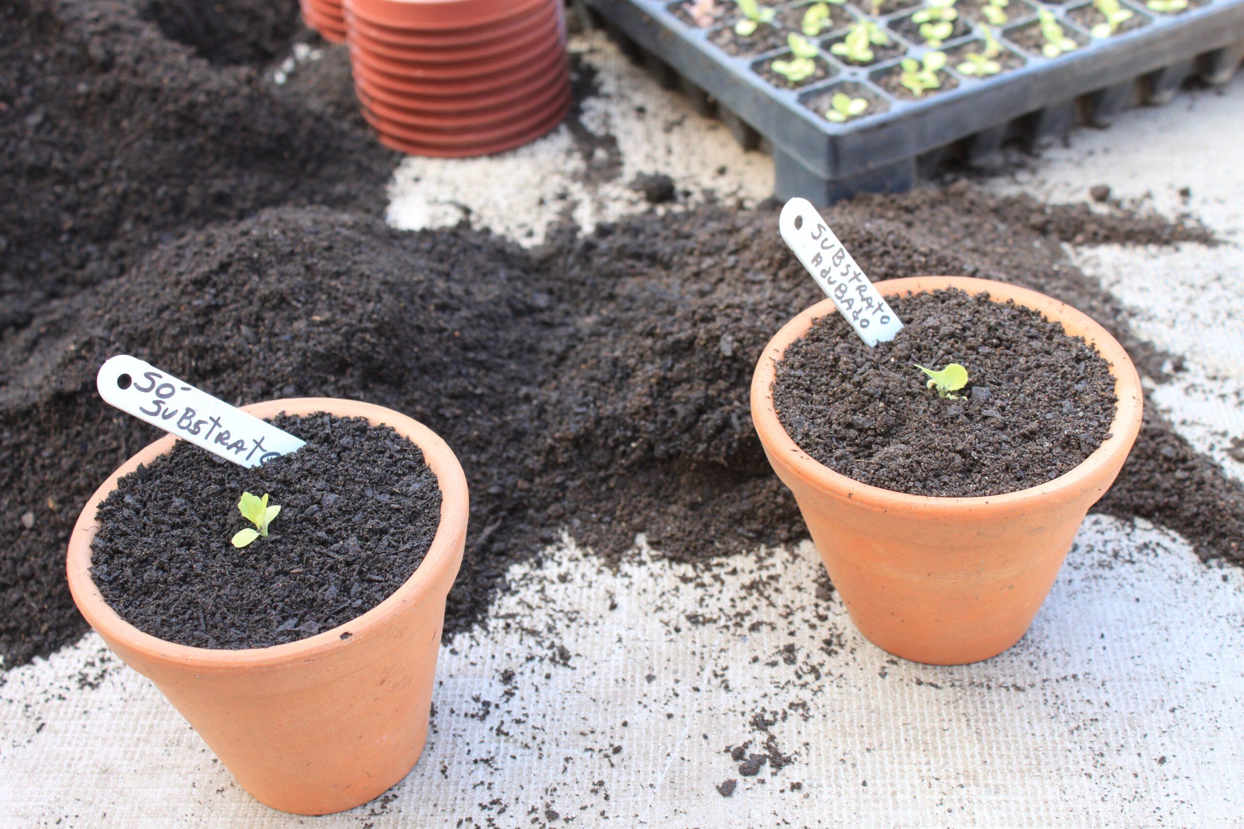 Como ter alfaces e outras hortaliças folhosas em mini espaços