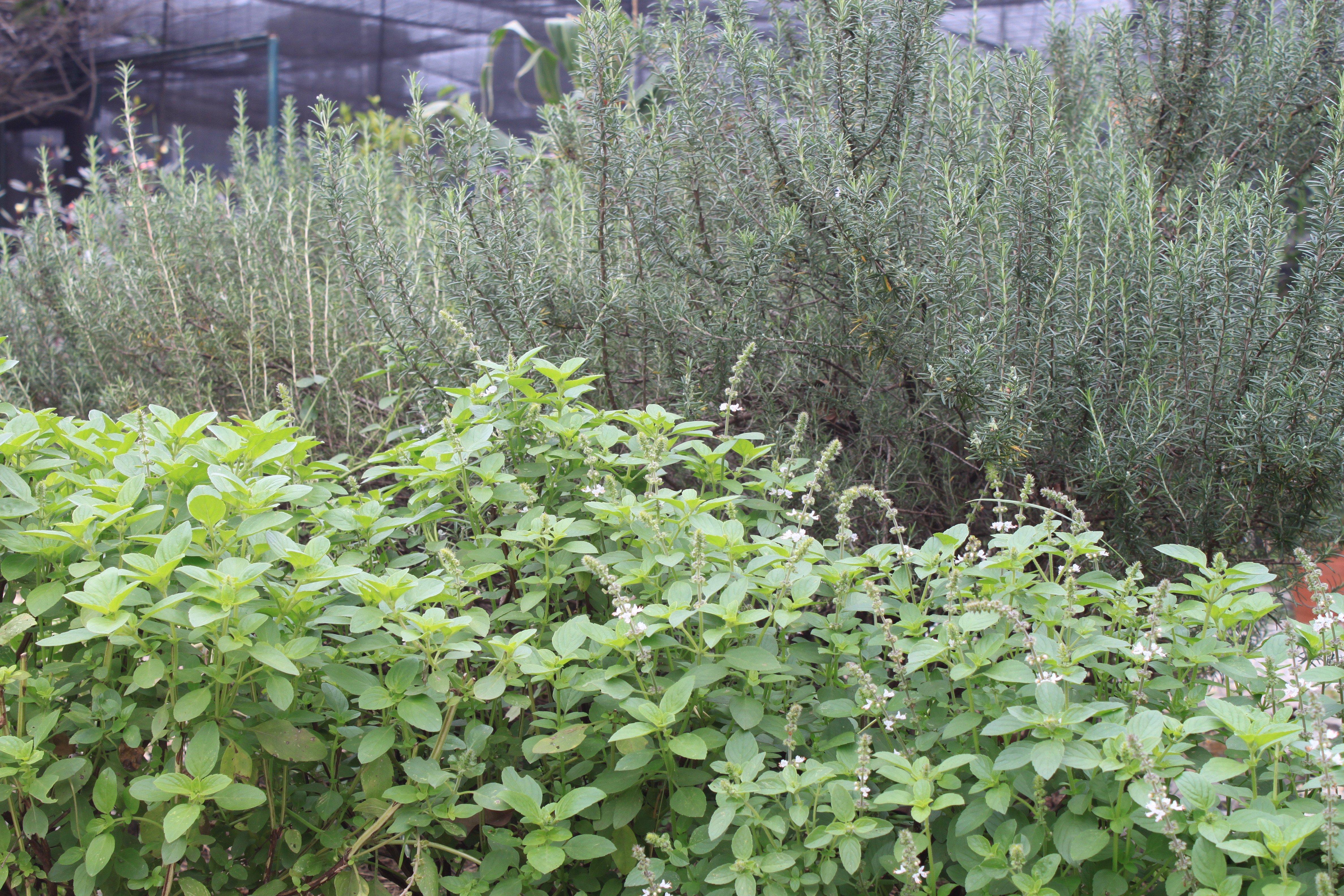Nossa horta no inverno ©Sabor de Fazenda