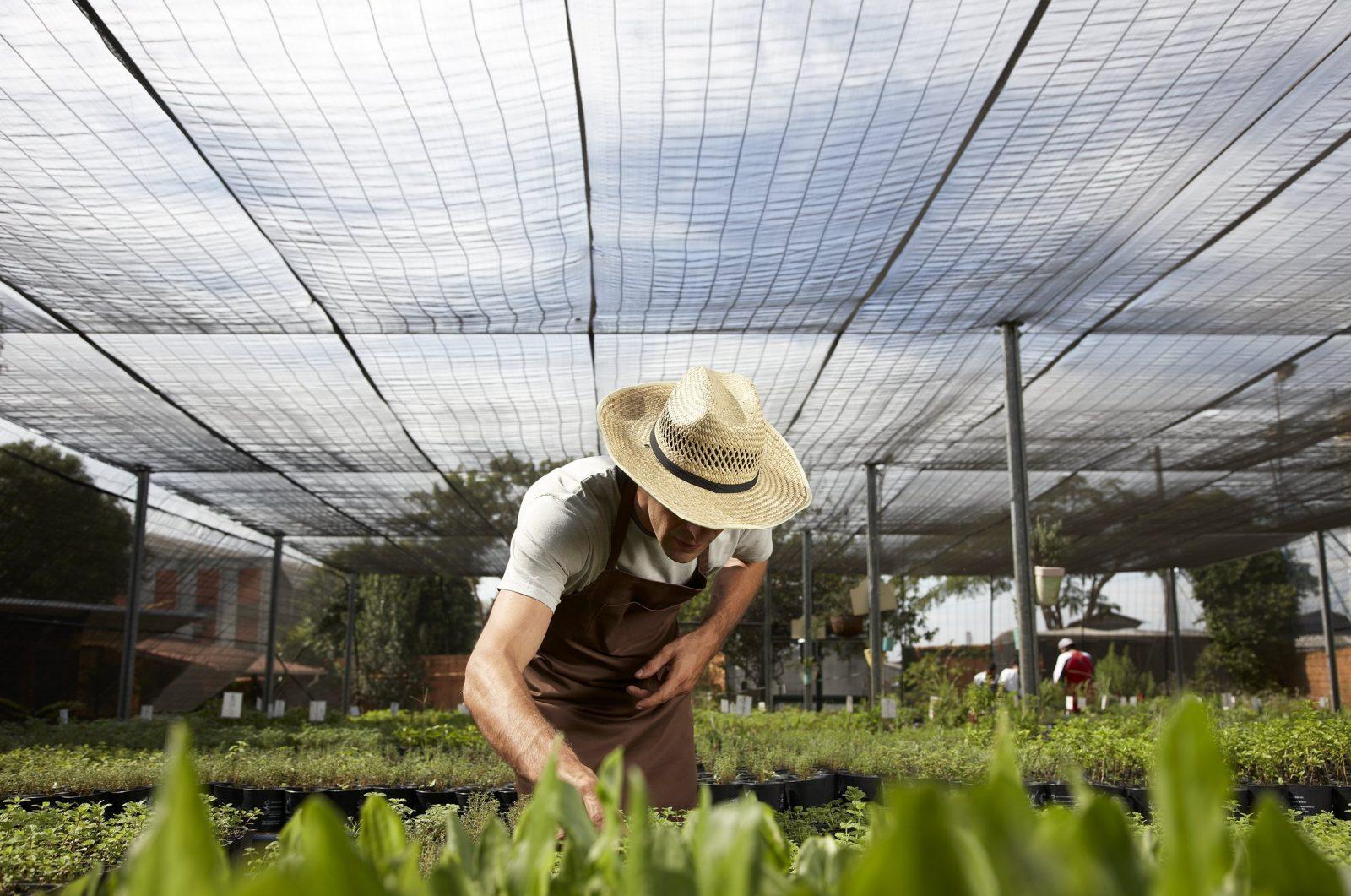 Diferentes tipos de agricultura: natural, biodinâmica, ecológica, permacultura e convencional
