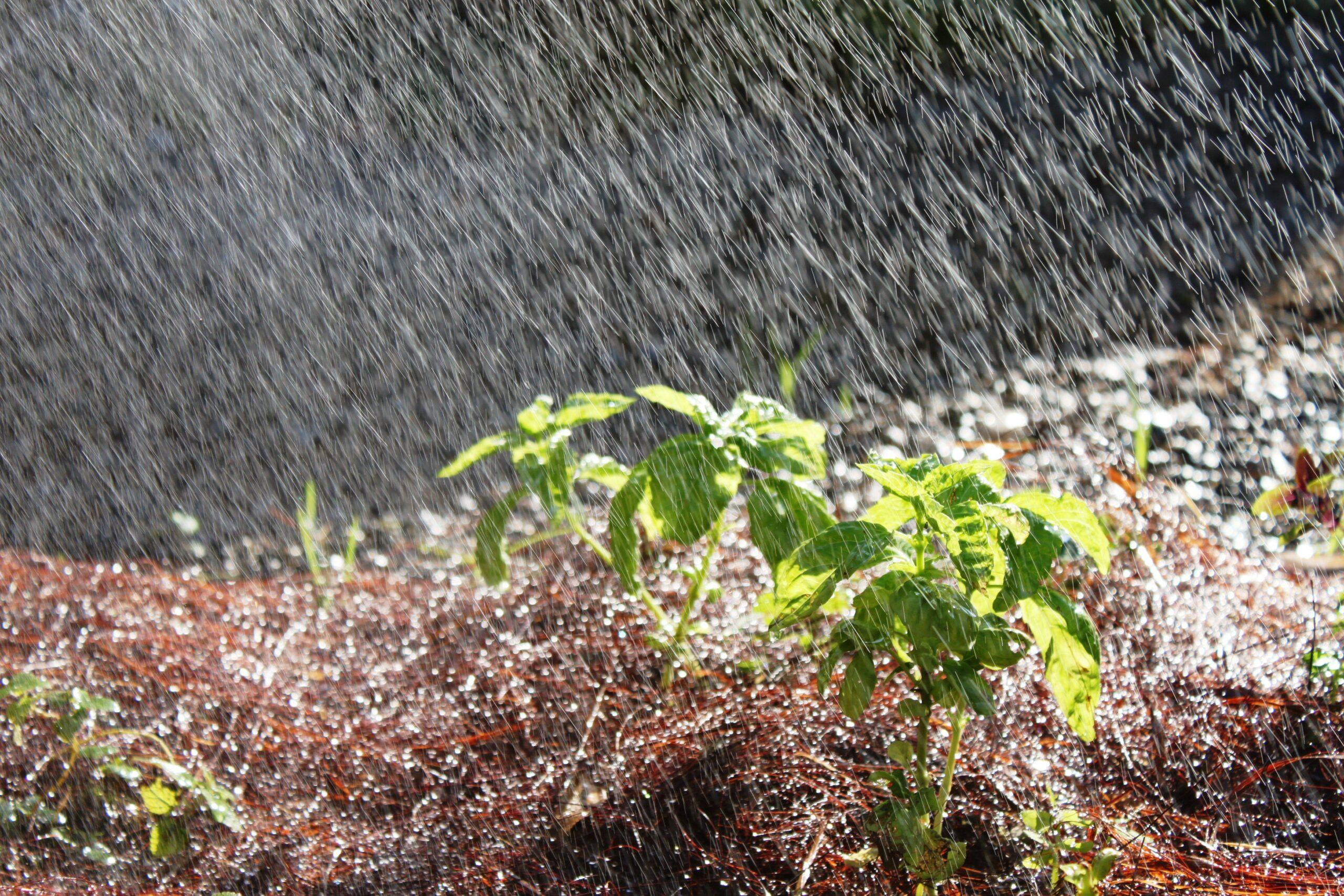 Atitudes para economizar água no seu jardim