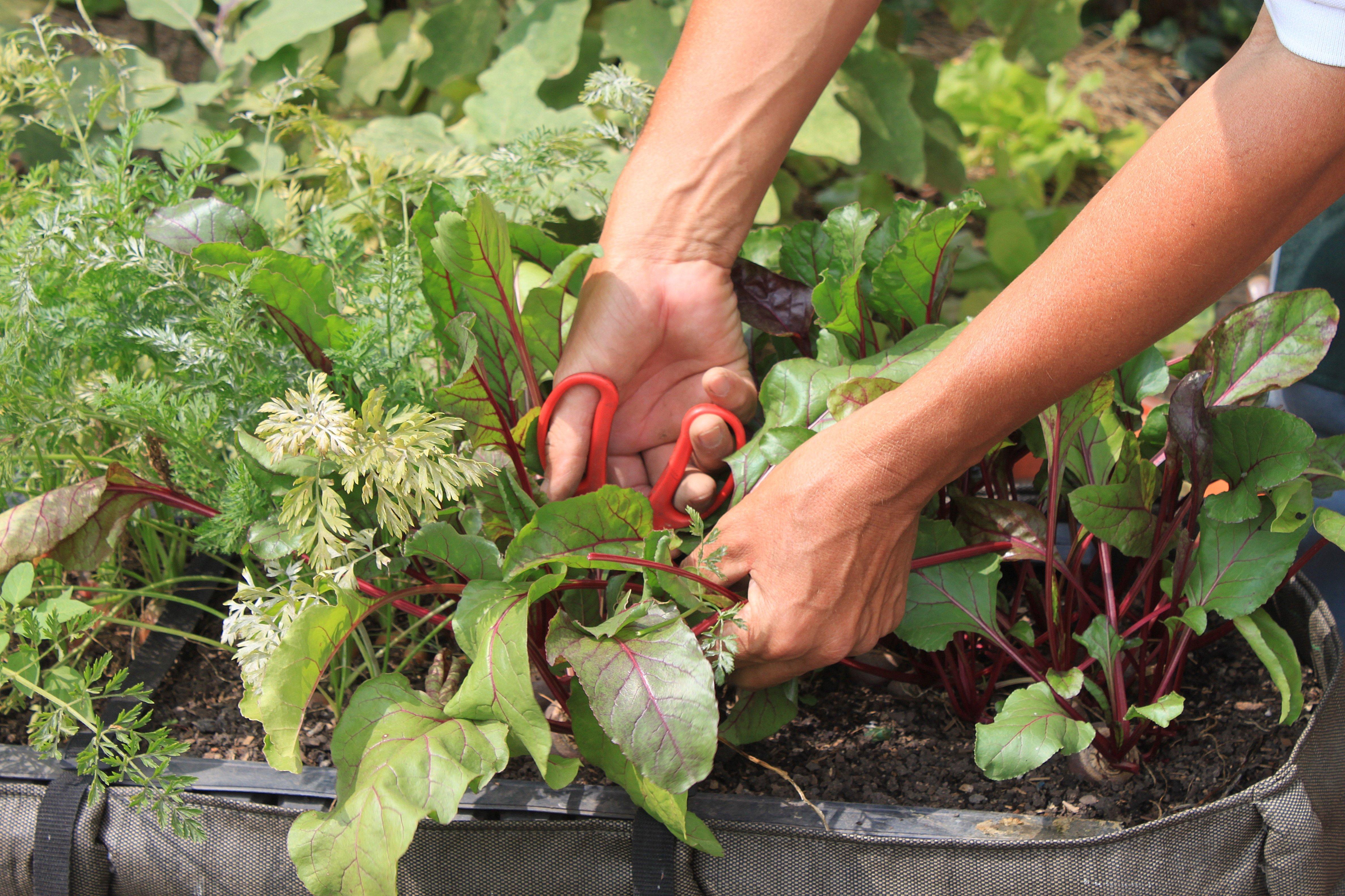 Saco de Plantio ©Sabor de Fazenda
