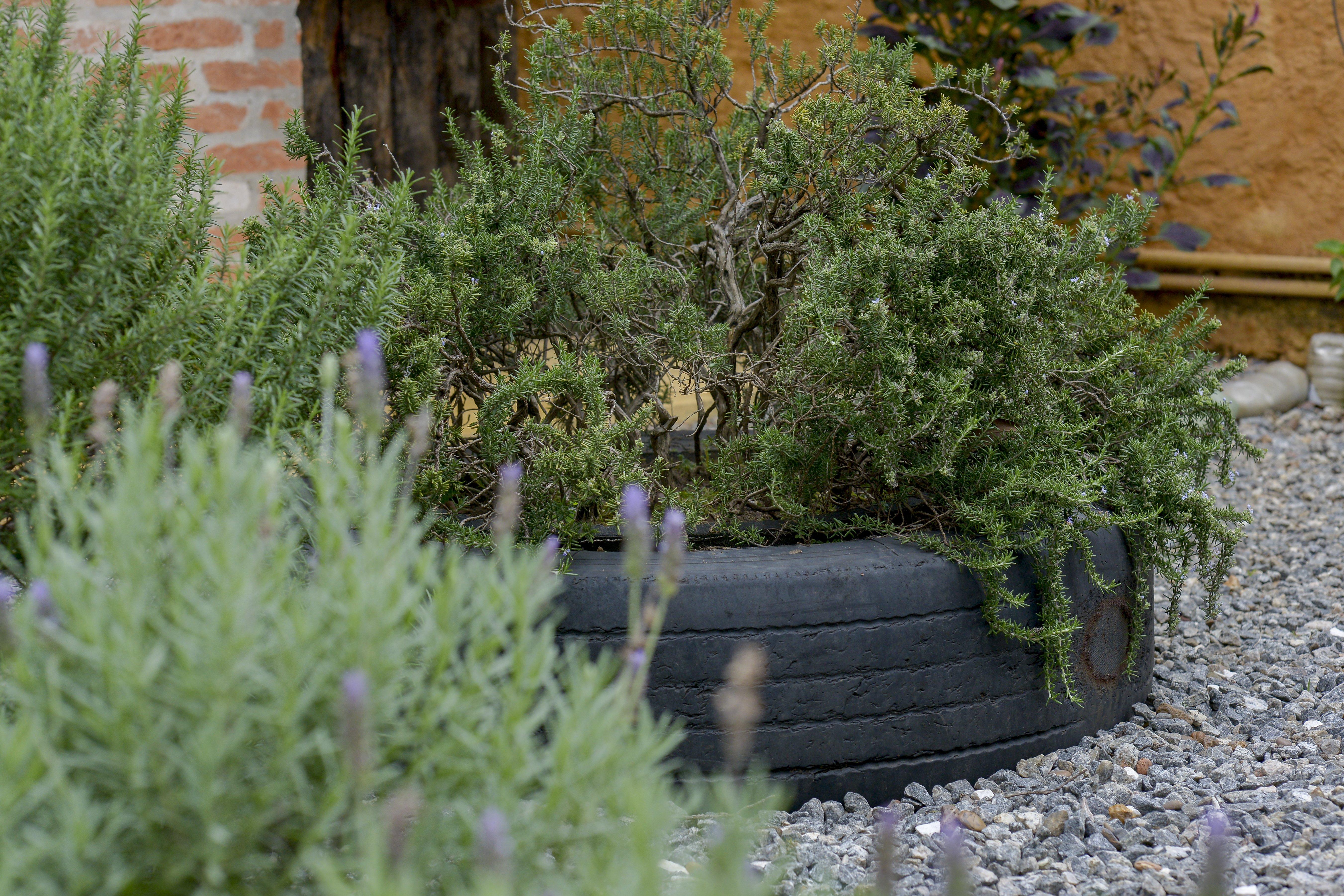 Vaso de pneu ©Ze Gabriel