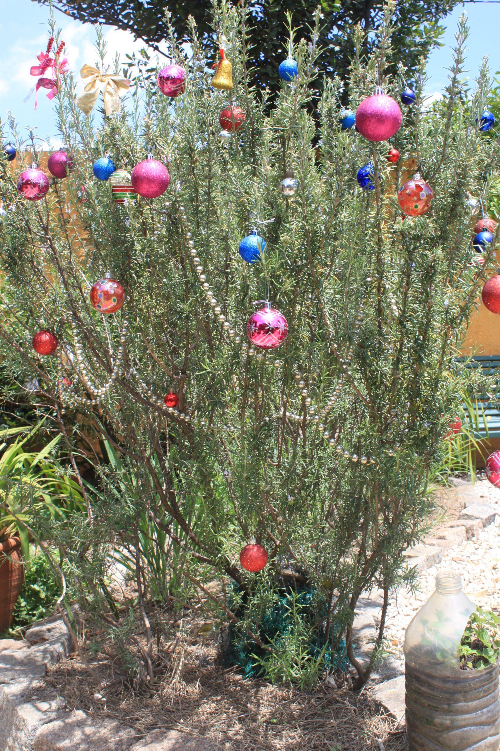 Dica de Decoração: Árvore de Natal de alecrim
