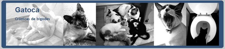 Catnip diferente by Gatoca