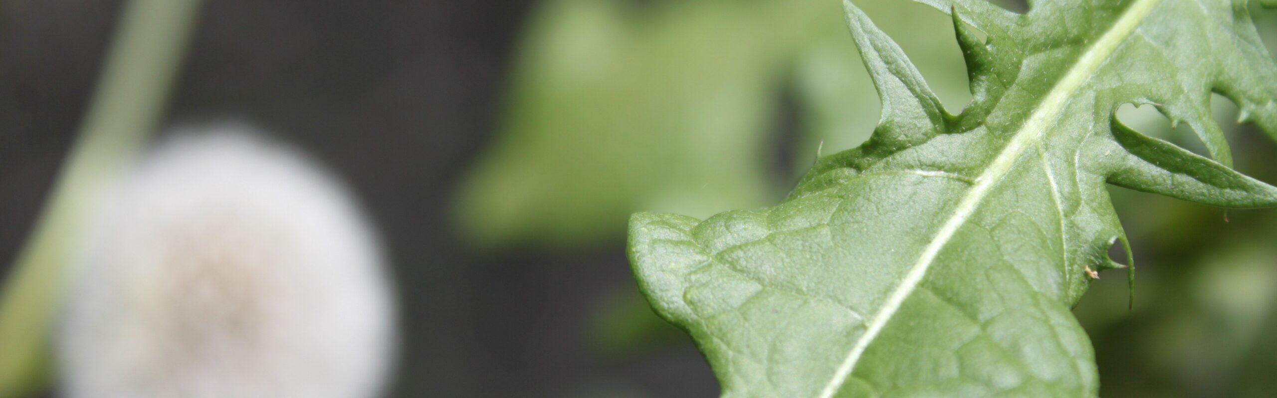Falando de PANC (Plantas Alimentícias não Convencionais)