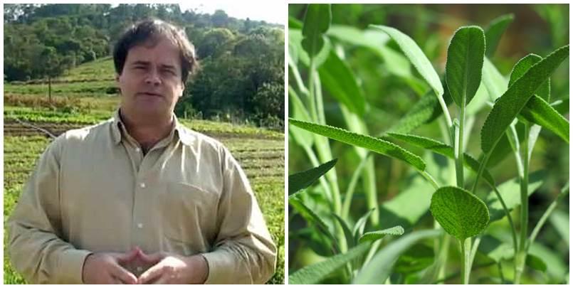 Importância do Cultivo de Plantas Medicinais