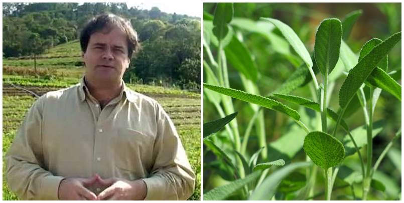 Divulgação_Cultivo_Organico_de_Ervas_Medicinais (2)