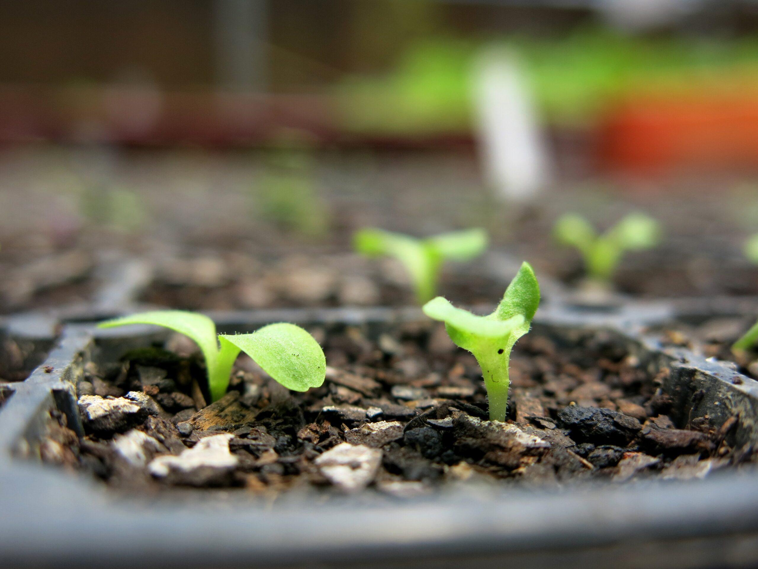 Dedinho Verde – Plantando com Arte!