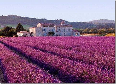 Jornada dos Sentidos – um mergulho nos Campos de Lavanda de Provence