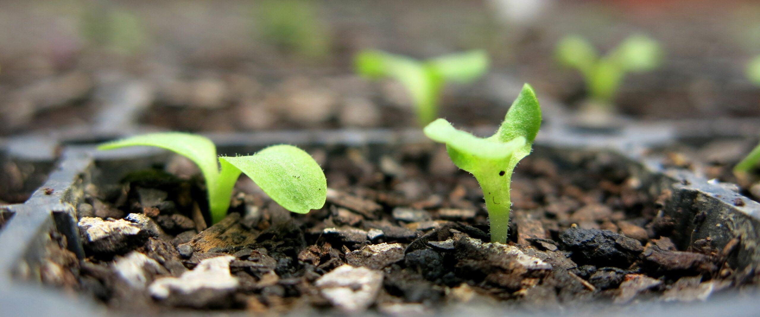Semear, coletar, guardar e compartilhar sementes