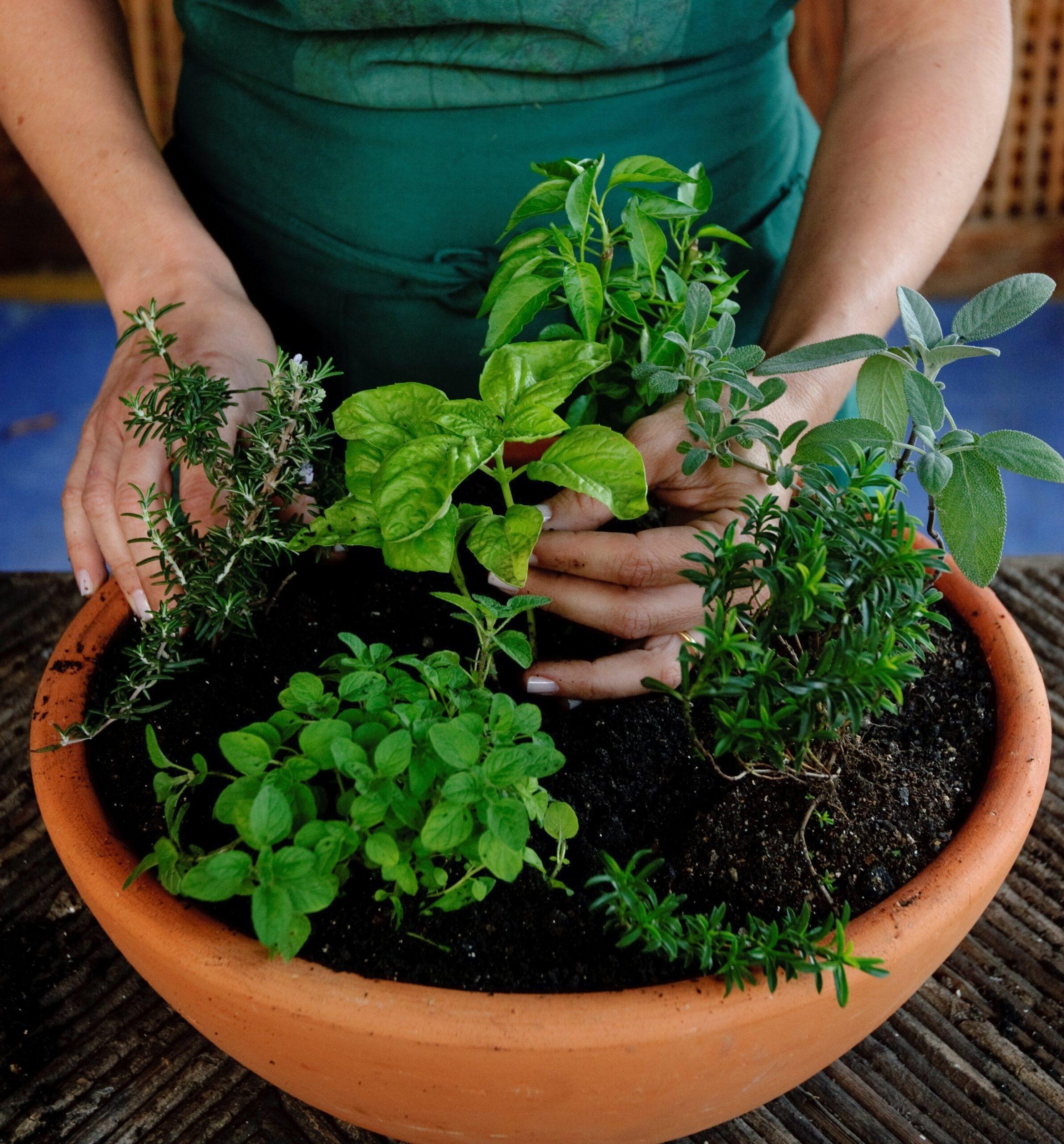 Horta Orgânica e Qualidade de Vida