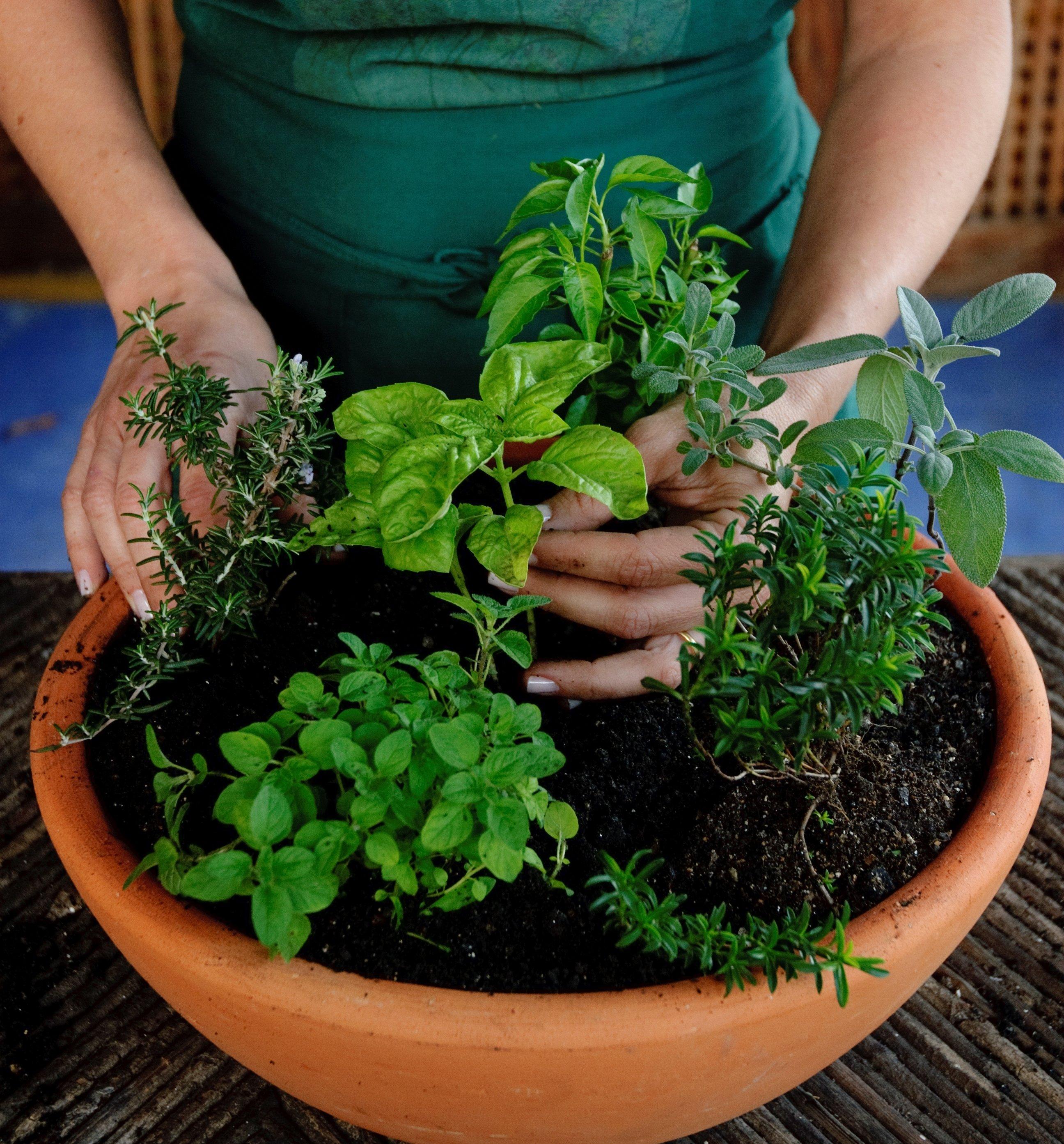 Horta Orgânica e Qualidade de Vida ©Zé Gabriel
