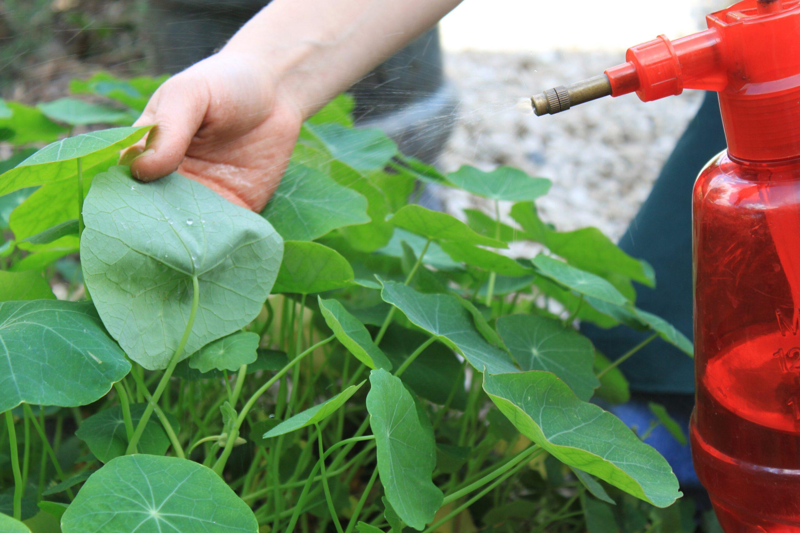 Adubação Líquida: dica para plantas saudáveis e bonitas!