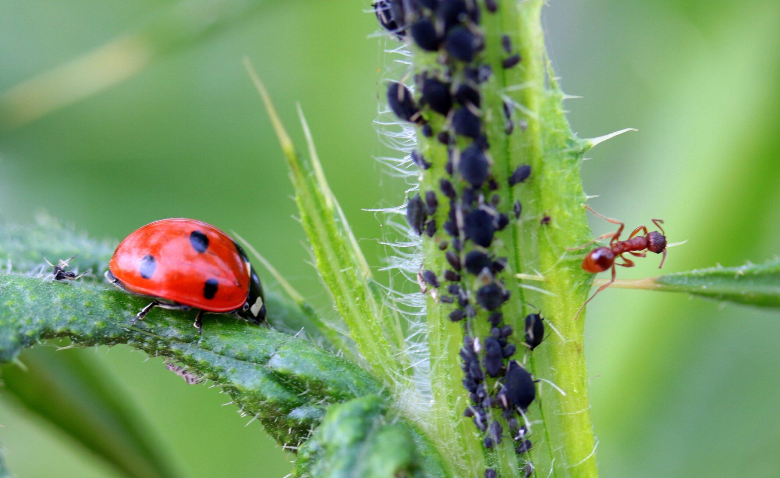 Fique de olho: formiga na horta