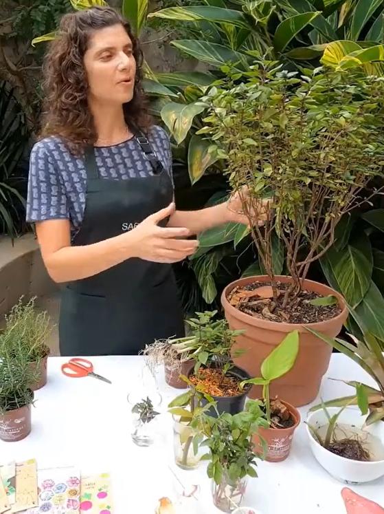 Teaching Kitchen com Sabor de Fazenda: como fazer uma horta